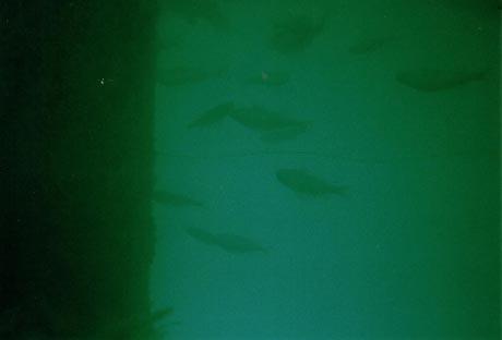 Fische im Westbad Überlingen