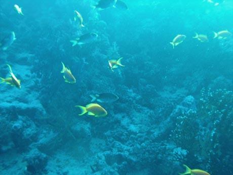 Fischreichtum bei Sakwa Abu Kalawa