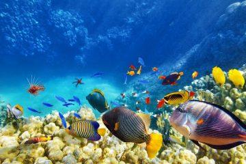 Zahlreiche bunte Fische in verschiedenen Größen und Formen schwimmen in den Riffs der Malediven. Bild: Urlaubsguru
